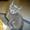 Котята-красавцы #1299296