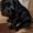 Милые щенки спаниеля ждут своих хозяев #1371502