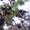 Распродажа саженцов плодово-ягодных из частного питомника #1396243