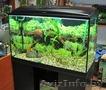 аквариум на 150 литров