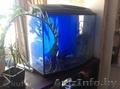 аквариум на 150 литров - Изображение #2, Объявление #1217513