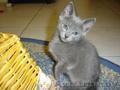 Котята-красавцы - Изображение #2, Объявление #1299296