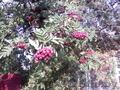 Распродажа саженцов плодово-ягодных из частного питомника - Изображение #4, Объявление #1396243