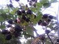 Распродажа саженцов плодово-ягодных из частного питомника